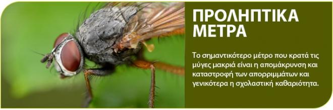Διαβάστε τους 5 απλούς τρόπους για να απαλλαγείτε για πάντα από τις μύγες!